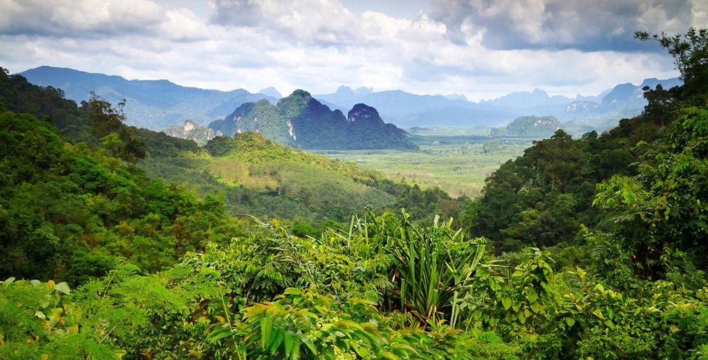 Descubre las selvas más frondosas
