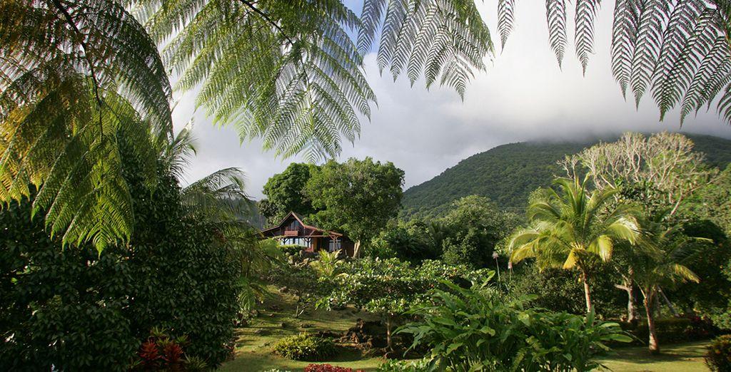 Avis le jardin malanga voyage priv for Au jardin tropical guadeloupe