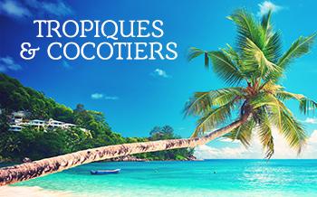 Tropiques et cocotiers