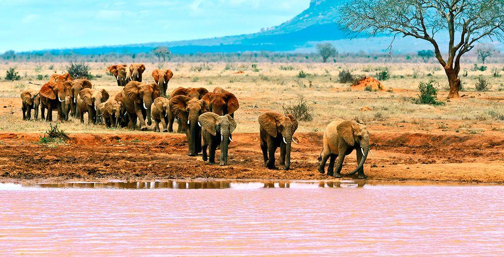 Besichtigen Sie Tsavo East