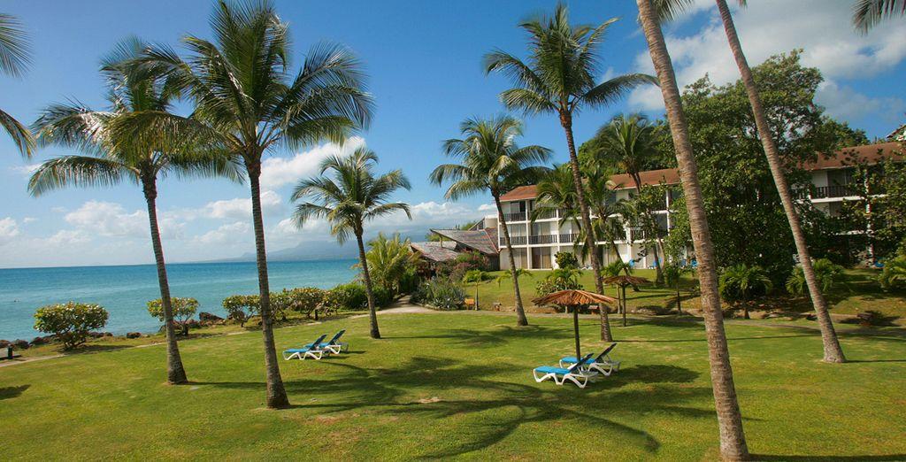 Unter der Sonne von Guadeloupe!