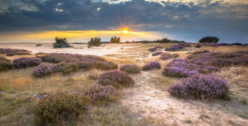 Erholen Sie sich im Nationalpark De Hoge Veluwe
