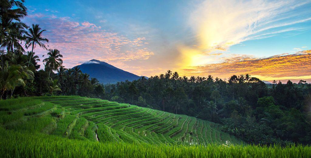 Sie beginnen Ihre Tour im Herzen der Stadt Ubud