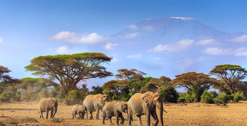 Lassen Sie sich von der Magie des Amboseli Nationalparks verzaubern
