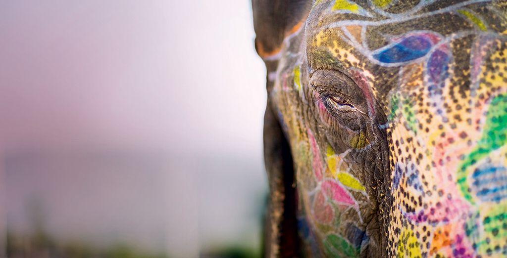 Reiten Sie auf einem Elefanten...