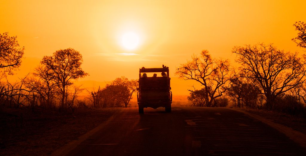Entscheiden Sie sich mit Option 2 für eine Safari im Nationalpark Krüger