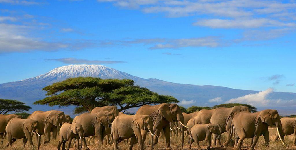 Bestaunen Sie die Schönheit Kenias