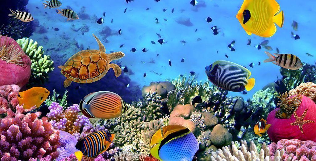 Nähern Sie sich dem wunderschönen Bahamas-Korallenriff