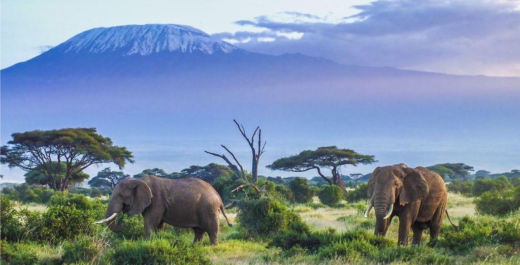 Kenia während Ihres Urlaubs entdecken