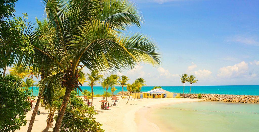 Träumen Sie davon, an diesem Strand zu entspannen?
