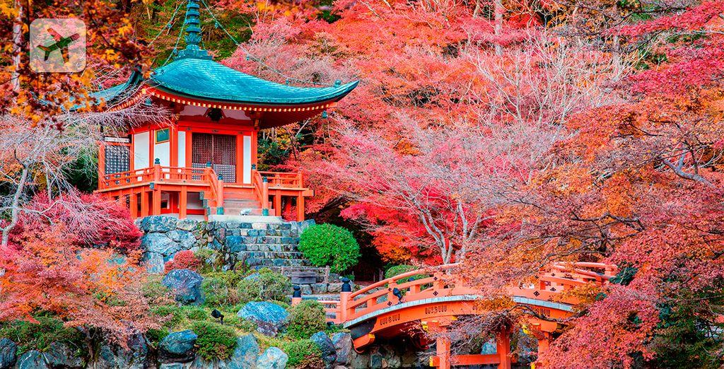 Descubra Japón en 9 días