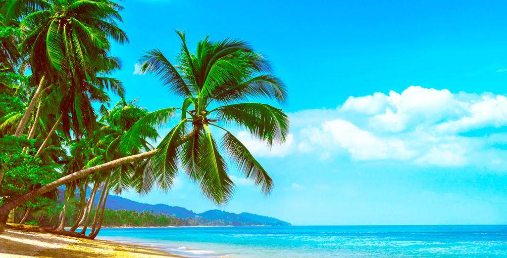 Bahamas te espera