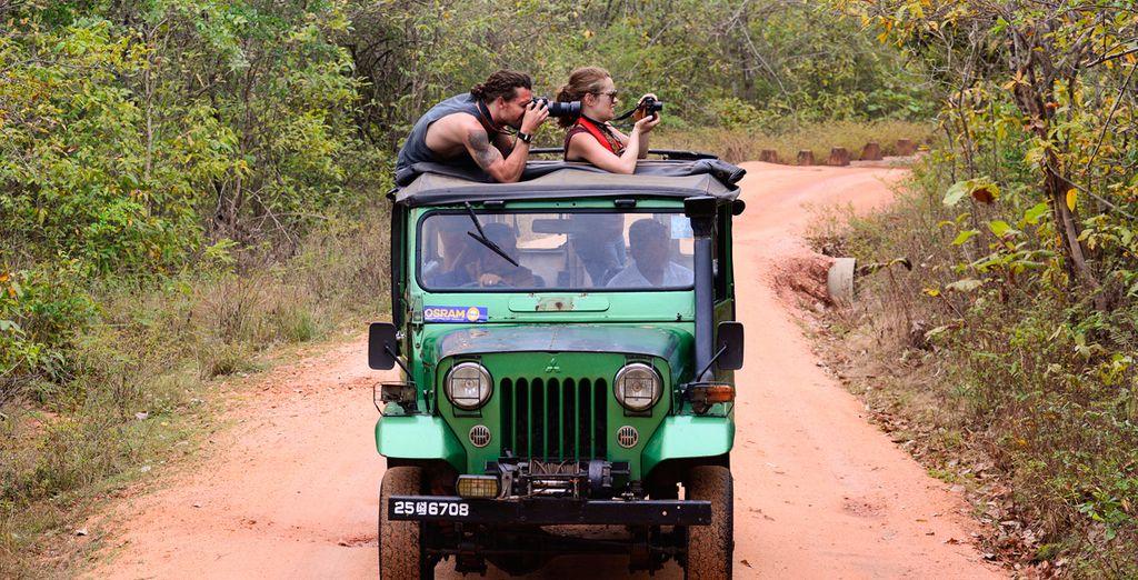 Disfrute de un safari por el Parque Nacional de Yala