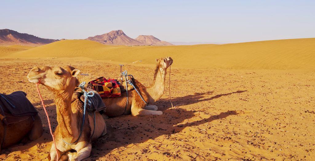 El desierto de Zagora es el lugar perfecto para encontrar la paz absoluta