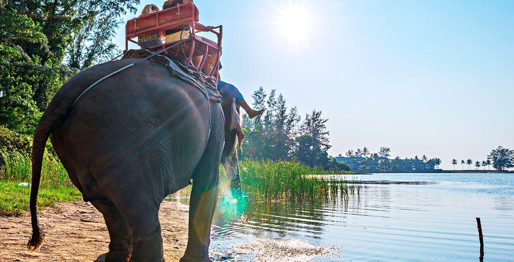 Disfrute de un paseo en elefante
