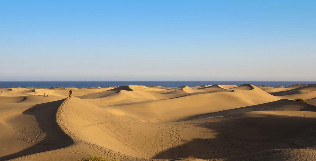 Visite las dunas de la Playa Maspalomas