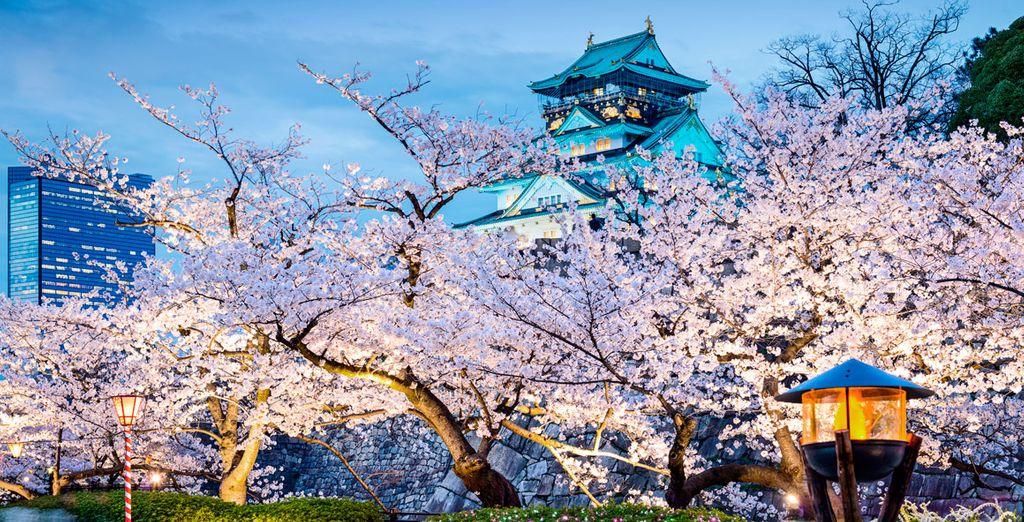 Japón le enamorará