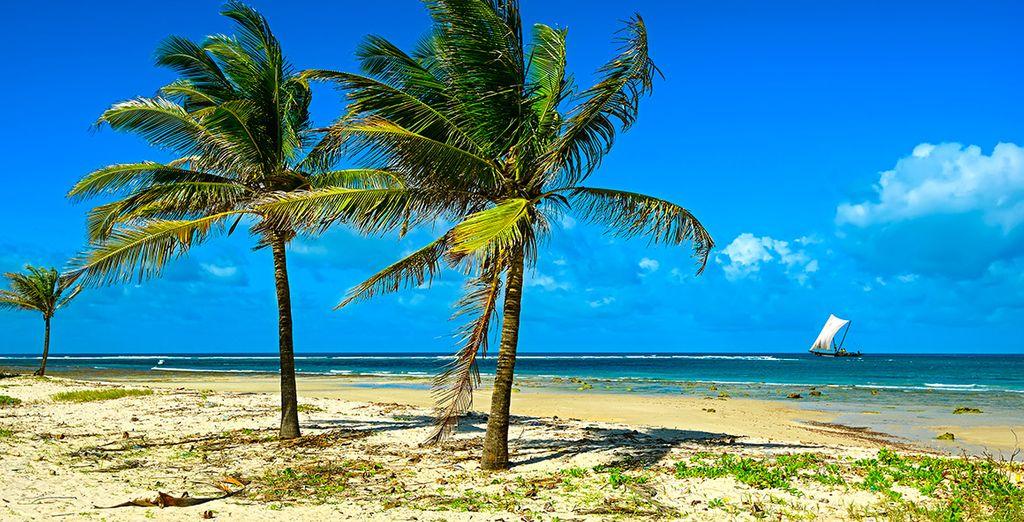 Disfrute de una estancia sin igual en Diani Beach