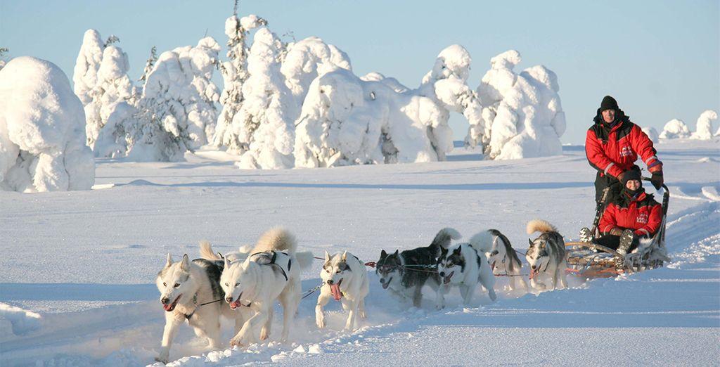 Los perros husky ladrarán entusiasmados para darte la bienvenida