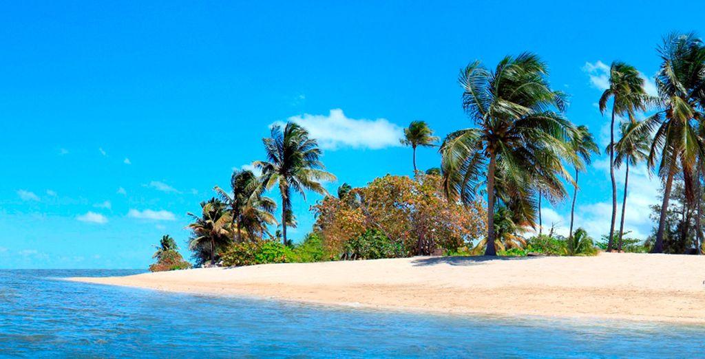 Ven a disfrutar de Puerto Rico