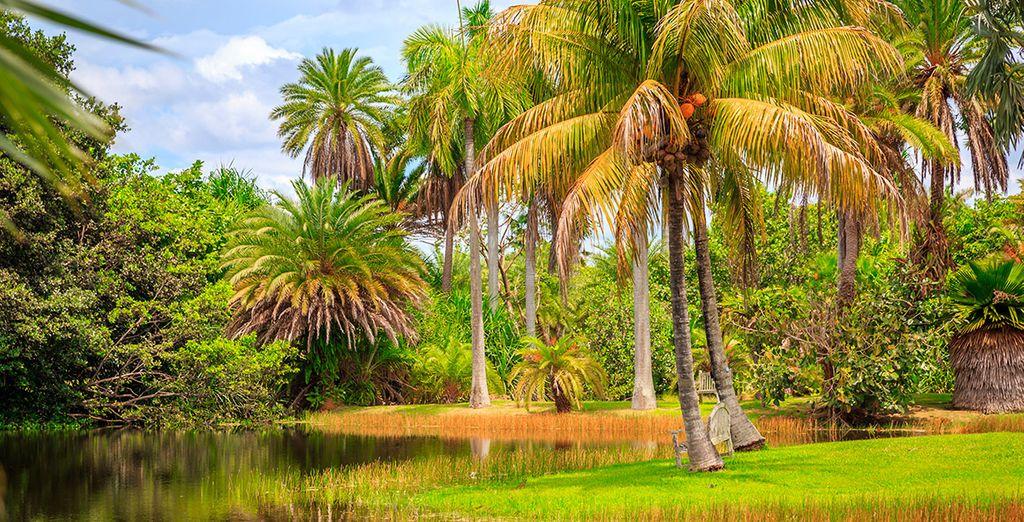 Visita el Jardín Botánico