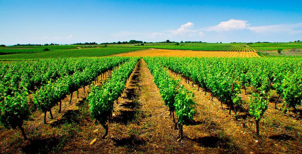 Crowne Plaza Montpellier - Corum 4* se encuentra en la zona de los vinos de Languedoc