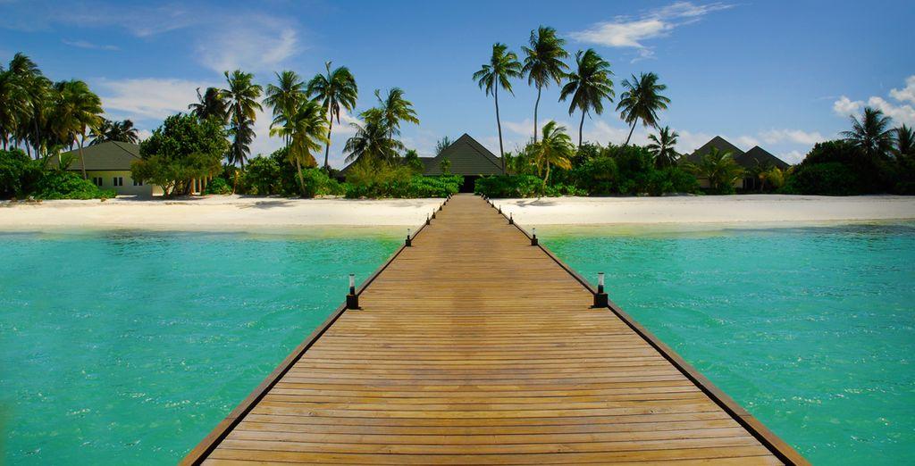Un auténtico paraíso te espera, en régimen de pensión completa