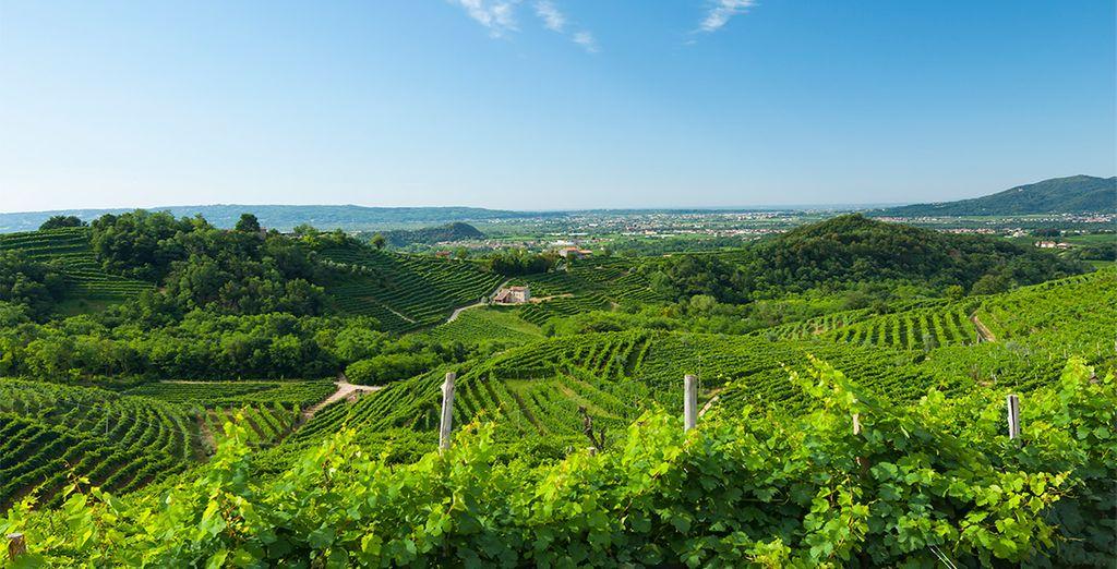 Descubre la belleza de los viñedos de Valdobbiadene, en Véneto