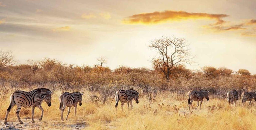 ...se produce la mayor migración de animales del mundo