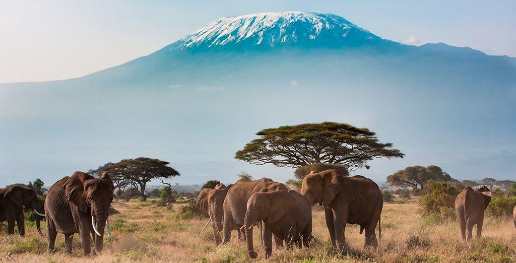 Contempla los elefantes y el Kilimanjaro desde el parque de Amboseli