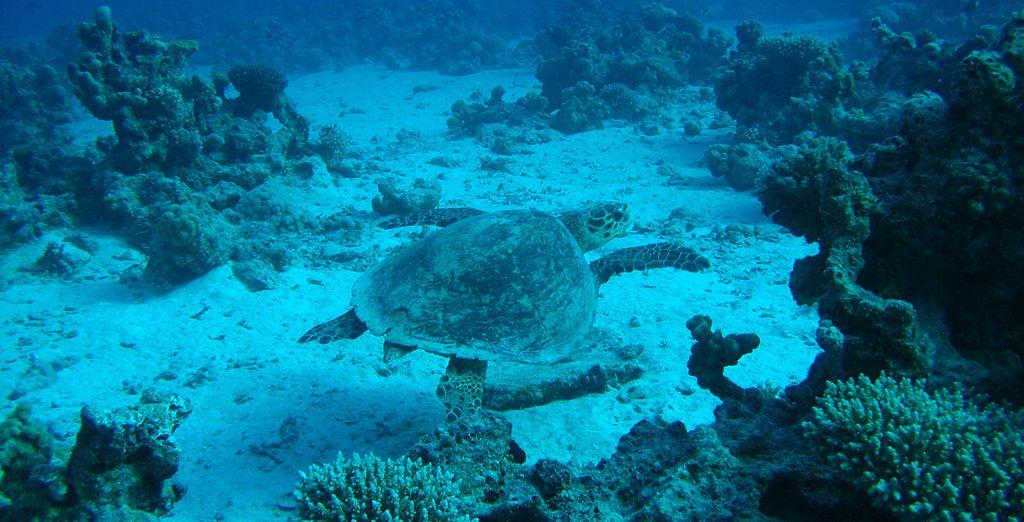 Descubre el fondo marino