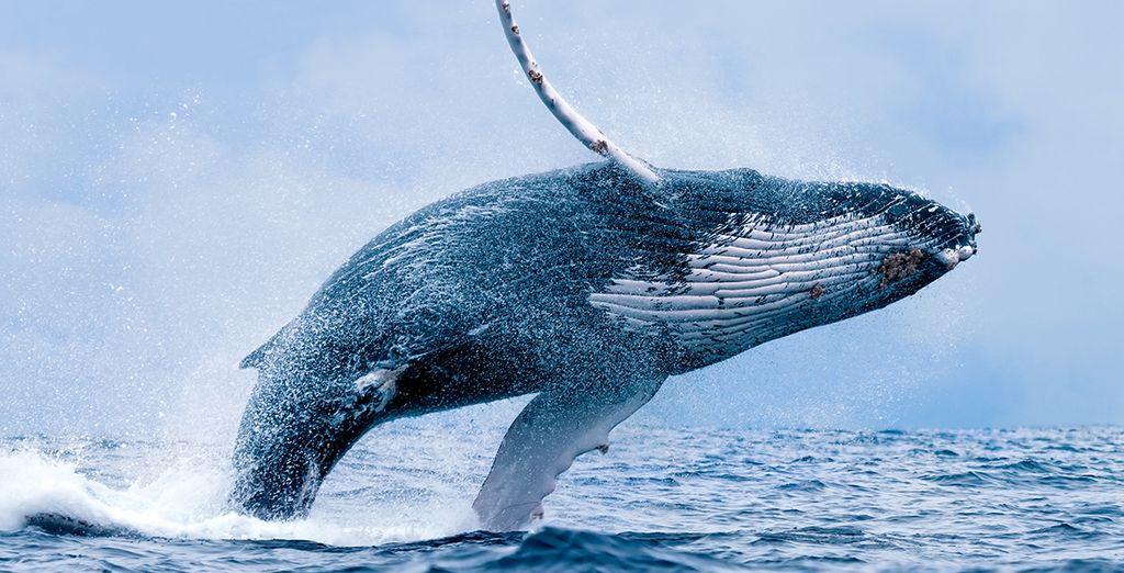 Navega para avistar ballenas