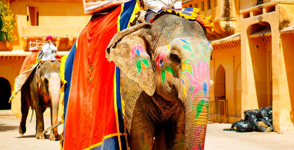 En Amber realizarás una excursión en elefante...