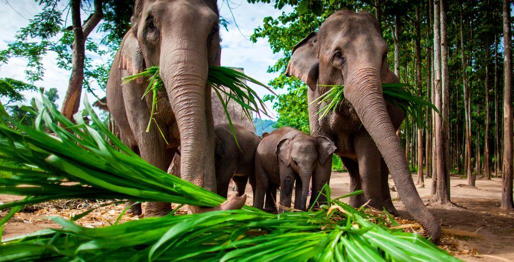 Disfrute de los elefantes en esta zona