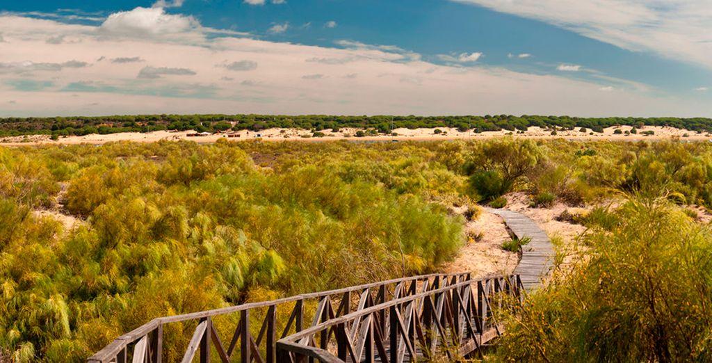 Escapadas de fin de semana a Huelva - Parque Natural de Doñana
