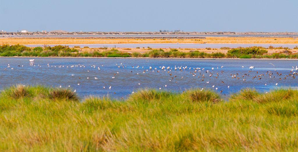 Hoteles todo incluido en Huelva - Parque Nacional de Doñana