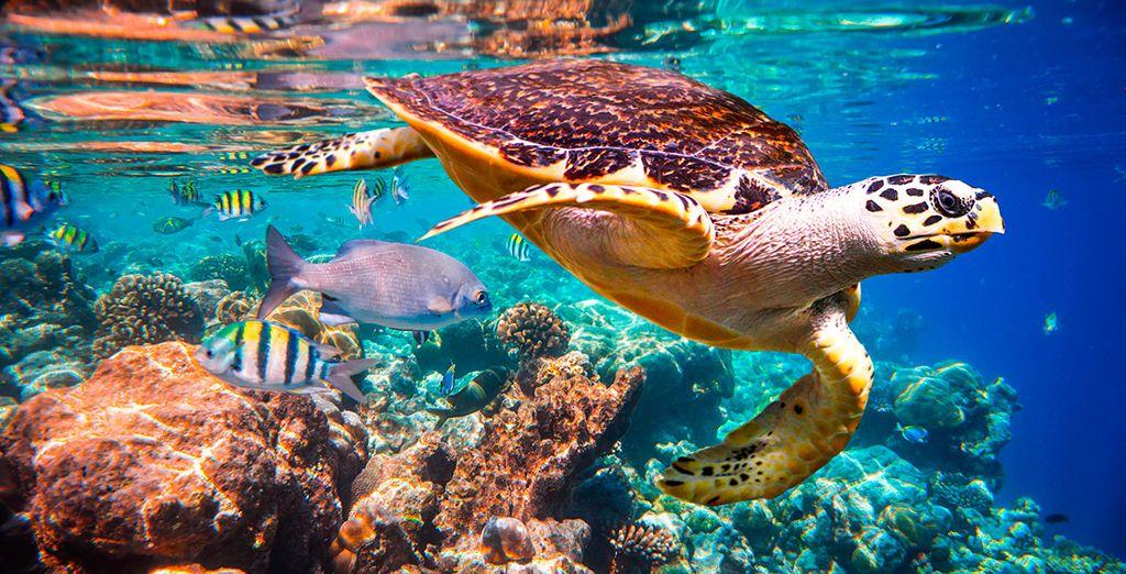 Snorkling en los arrecifes de Maldivas