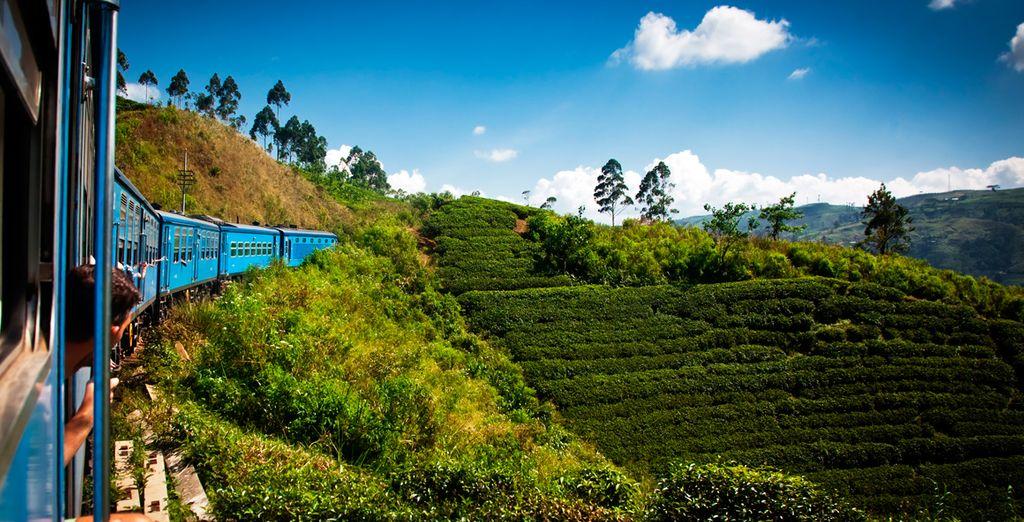 Plantaciones de té en las tierras altas de Sri Lanka, en Kandy