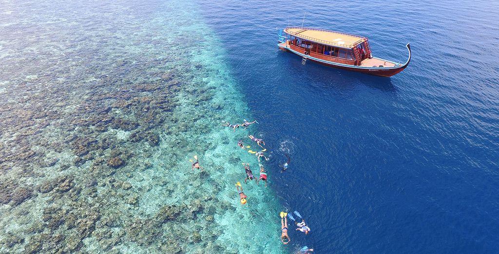 Todo lo que necesita saber en nuestra guía de viajes a Maldivias
