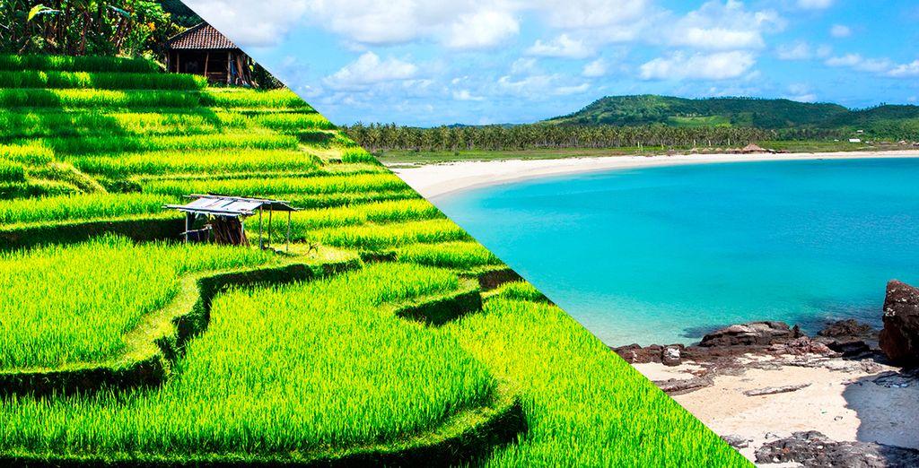 Combinado entre Ubud y Tanah Lot
