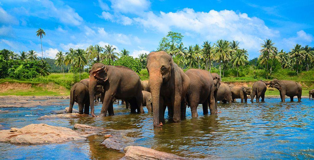 Descubra las maravillas de Sri LanKa