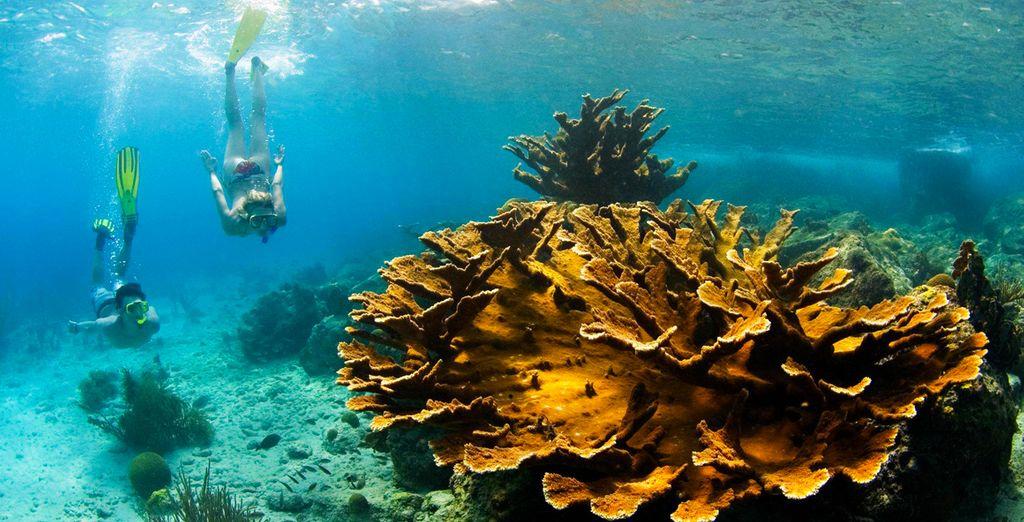 Aprovecha para descubrir las profundidades del mar