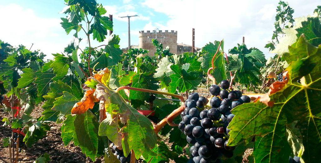 Degusta los deliciosos vinos de la región