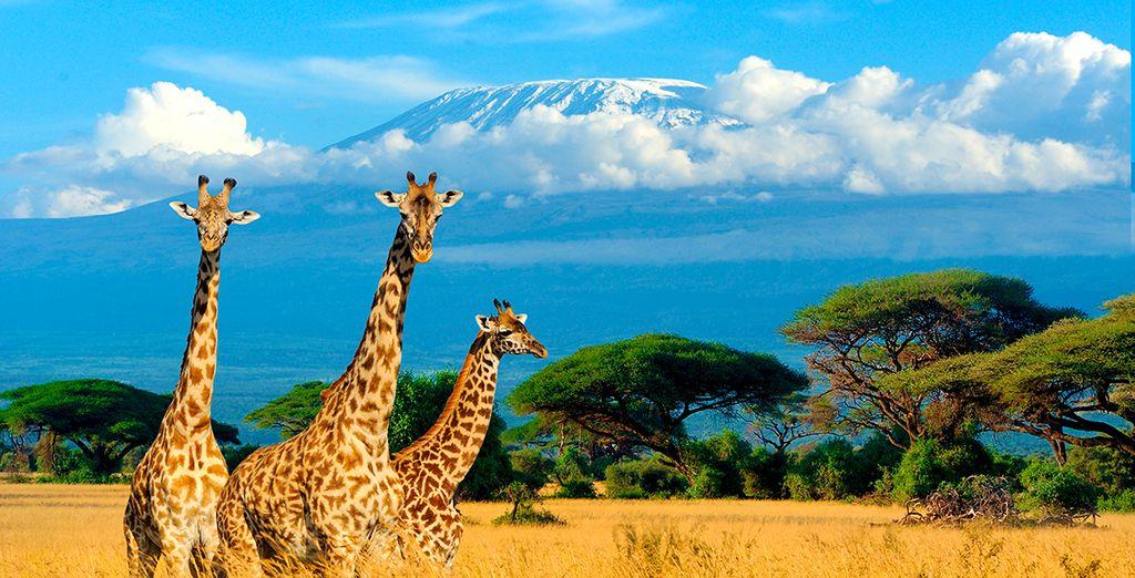 ¡Deja que la grandeza de África te atrape!