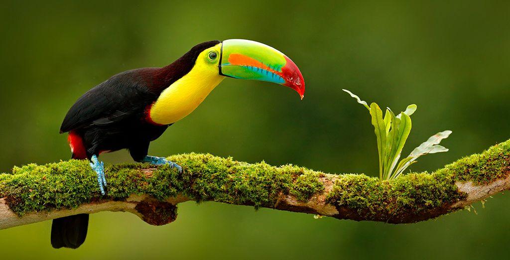 Bienvenido a la hermosa Costa Rica