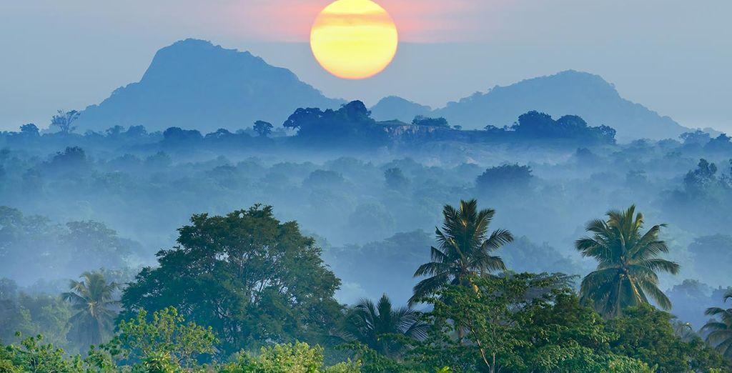 Embarquez pour un voyage d'exception à la découverte du Sri Lanka et de Dubaï.