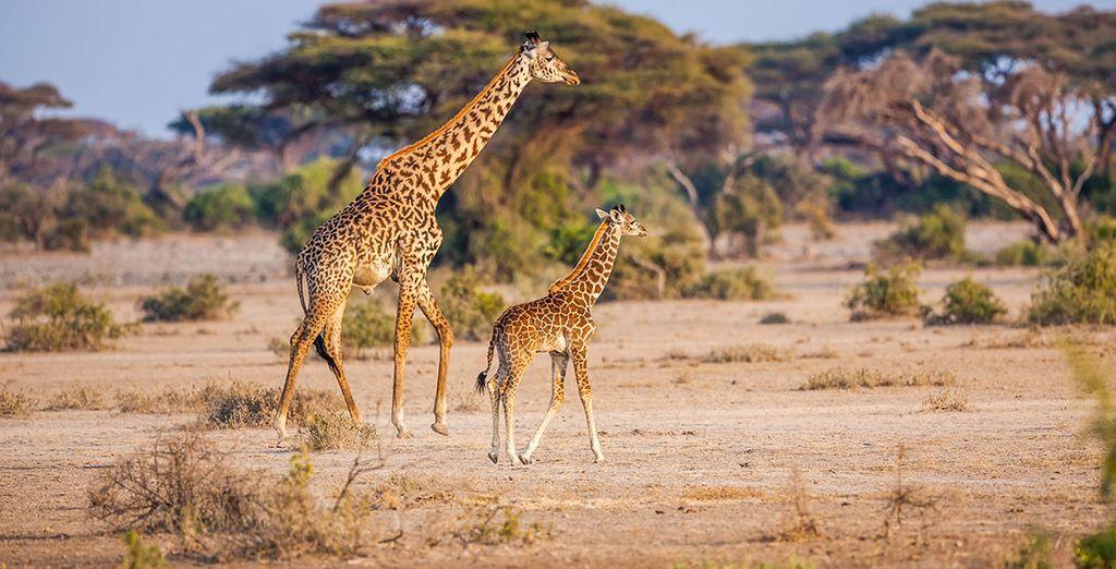 Avez-vous déjà souhaité approcher les animaux d'Afrique ? - Séjour Safari 7 nuits en Réserve Privée Johannesburg
