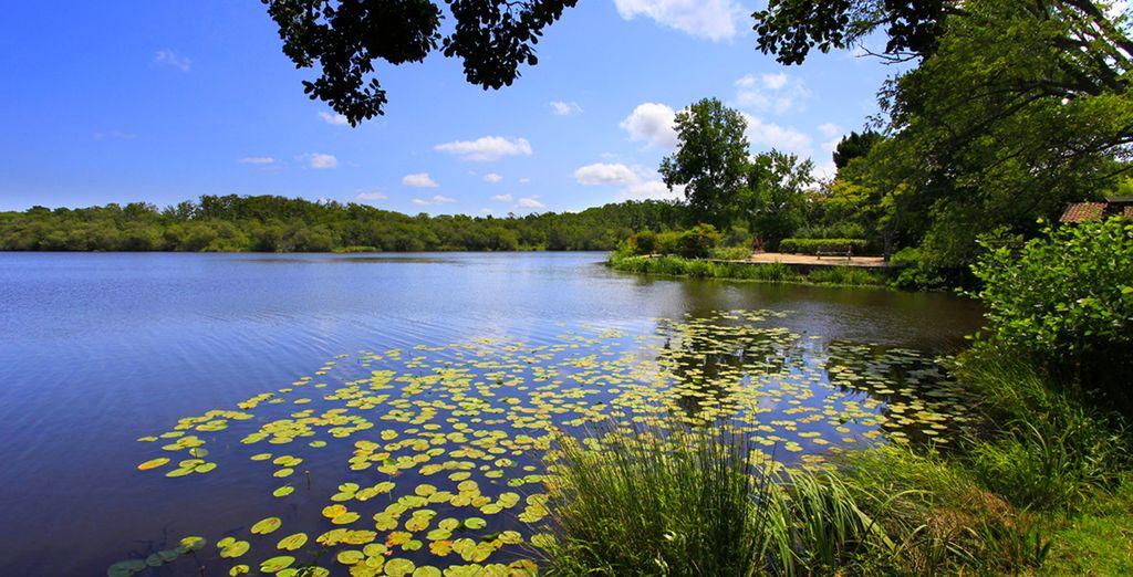 A proximité, flânez au lac d'Aureilhan