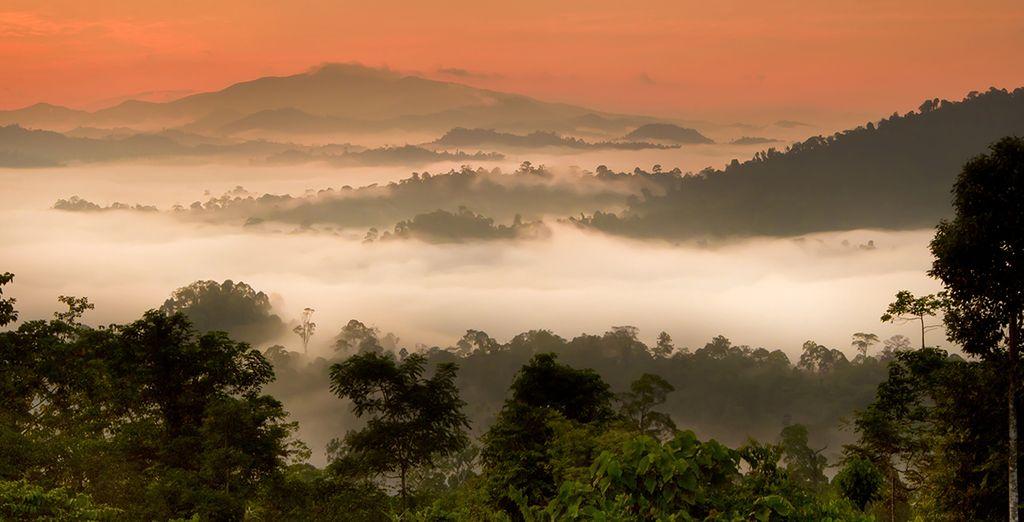 Dans la jungle impénétrable de Sabah au nord est de Bornéo