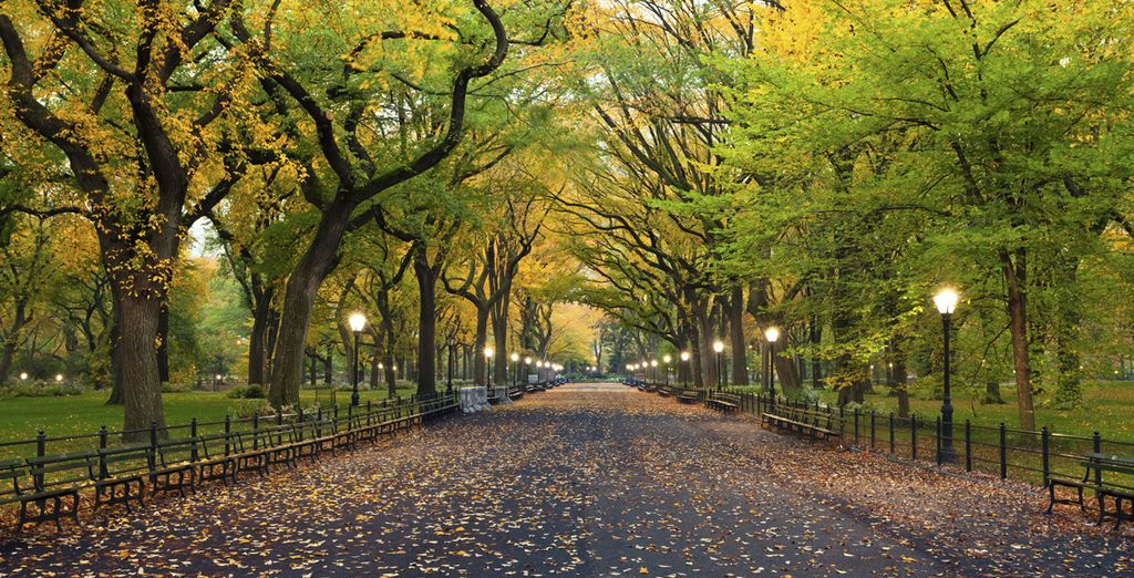 Promenez-vous dans Central Park...